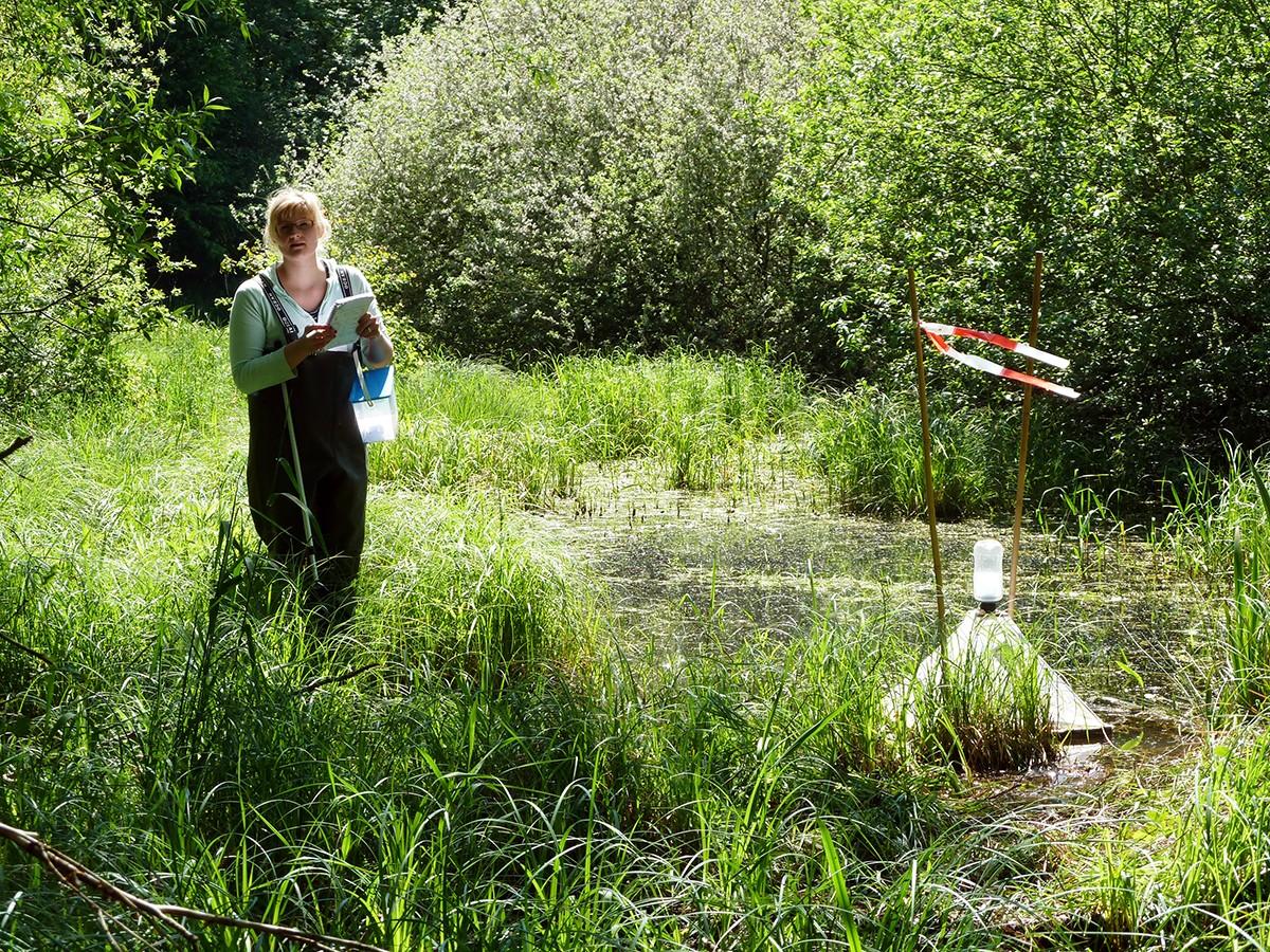 Die Forscherin Stefanie Allgeier aus dem Projekt Moscofee macht Untersuchungen in Neustadt Geinsheim zur Stechmückenpopulation. Foto: Anna Kästel