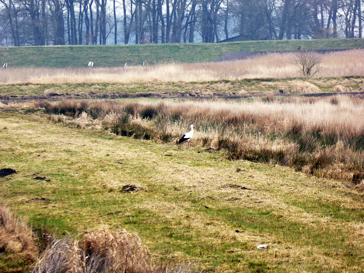 Wo hat der Storch sein Nest gebaut? Dieser Frage ging Anja Böhmer in ihrem Praktikum nach. Foto: Privat