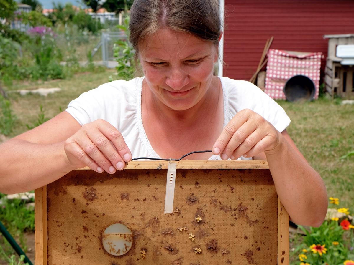 Imkerliches Zubehör: im Plastikkäfig werden Königinnen unter Zuckerteigverschluss einem weisellosen Volk angehängt, die Bienenflucht (Holzrahmen) dient dem Befreien der Waben vor der Schleuderung.