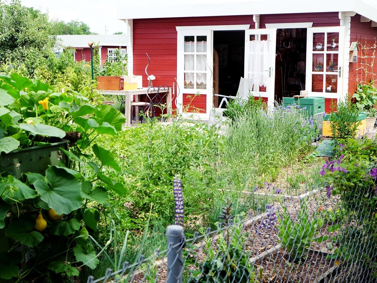 Der schöne Schrebergarten mit Häuschen im Schwedenstil bietet tägliches Urlaubsgefühl.
