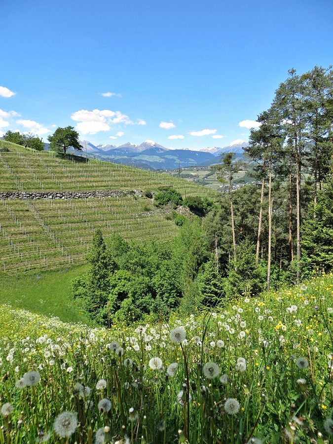 Grüne Wiesen und blauer Himmel: Südtirol von seiner schönsten Seite. Foto: Privat
