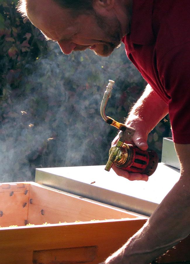 Lisa Hoffmanns Vater imkert nebenberuflich. 50.000 Honigbienen zählt das Bienenvolk in Klingenmünster. Jede einzelne leistet ihren Beitrag für Flora und Fauna.
