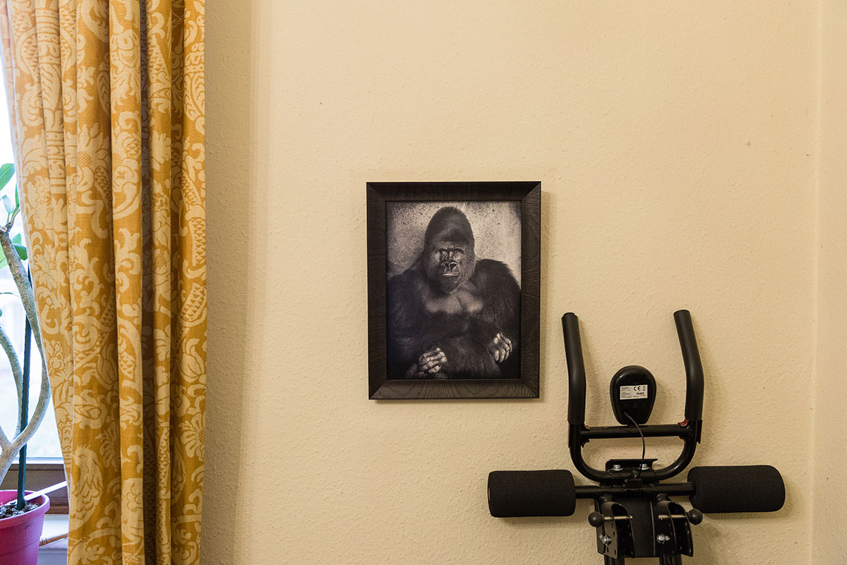 ... auch das Gorilla-Porträt. Foto: Teresa Schardt