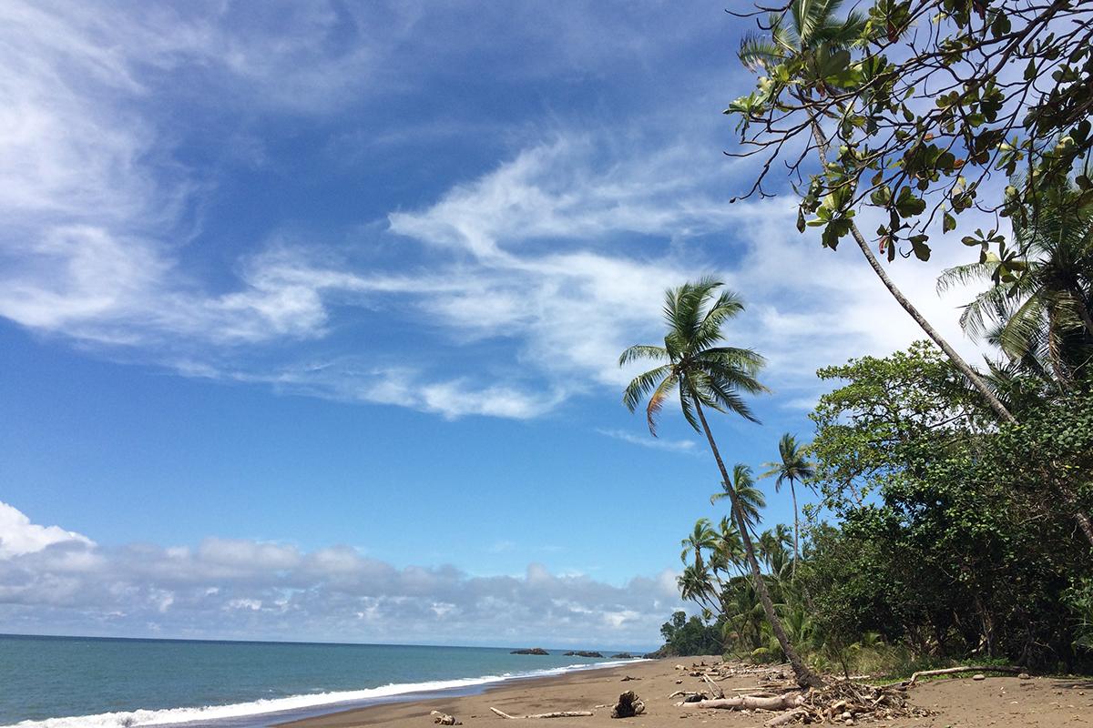 Wunderschöne Strände, blaues Wasser und Palmen kennzeichnen die Küste der Bahía Drake. Foto: Lisbeth Wolf