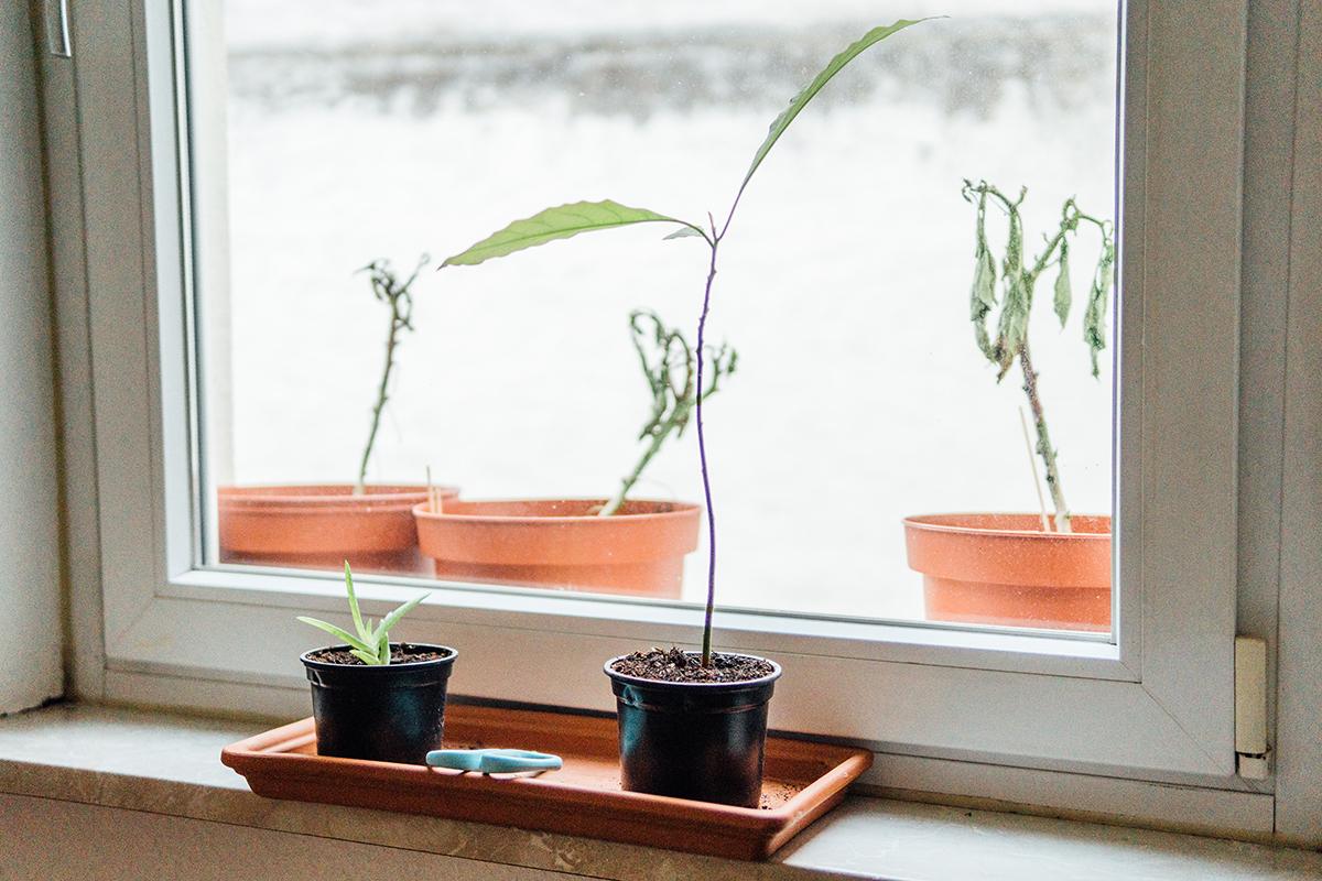 Pflanzen haben es in der etwas dunklen Wohnung genauso schwer...